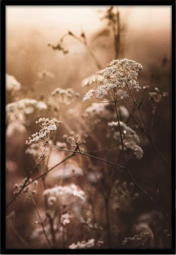Rahmenbild Autumn