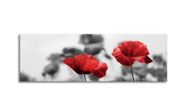 Glasbild Red Poppy