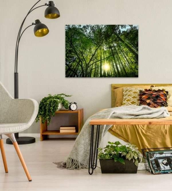 Glasbild Sonnenstrahlen im Wald (im Wohnzimmer)