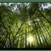 Glasbild Sonnenstrahlen im Wald