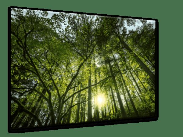 Glasbild Sonnenstrahlen im Wald Ansicht schräg