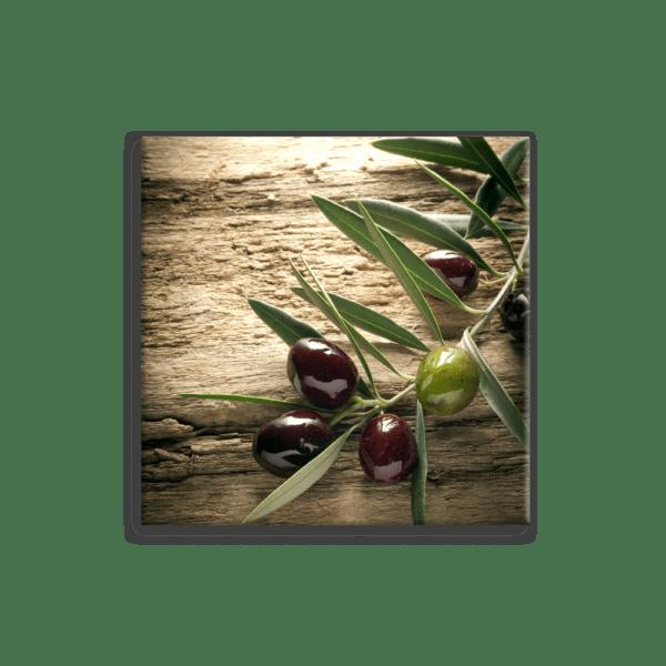 Glasbild Olivenzweig
