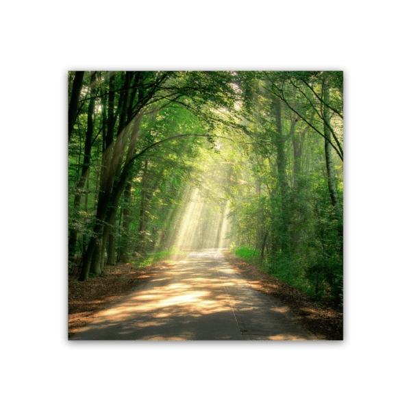Glasbild Pfad im Wald