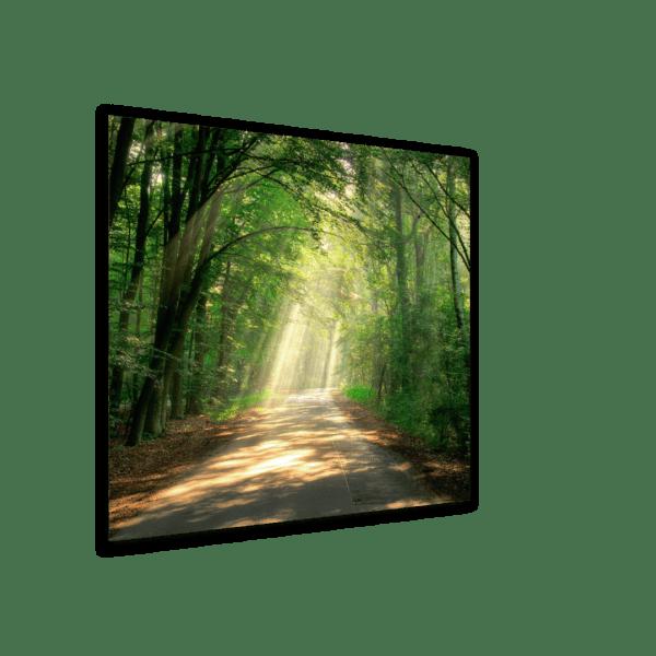 Glasbild Pfad im Wald Ansicht schräg