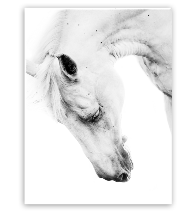 Leinwandbild Horse Portrait