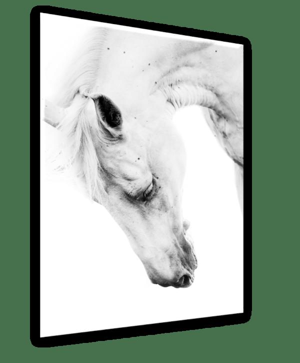 Leinwandbild Horse Portrait Ansicht schräg