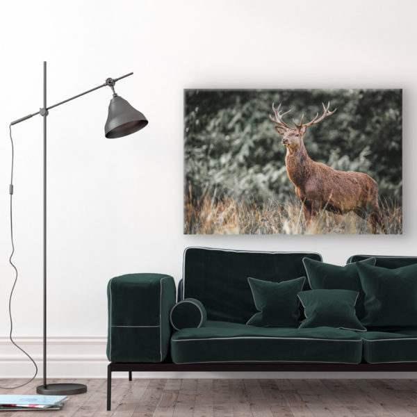 Glasbild Deer im Wohnzimmer