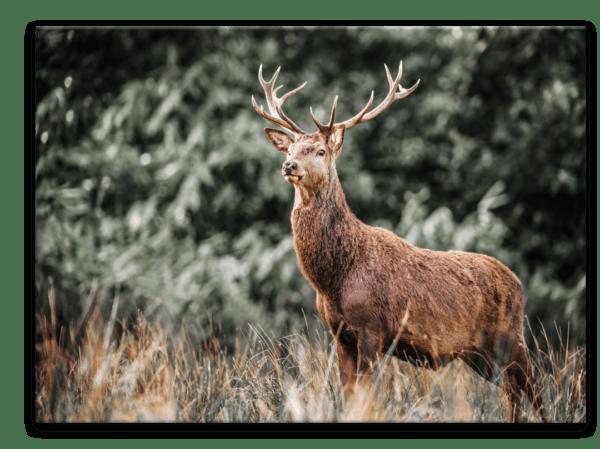 Glasbild Deer