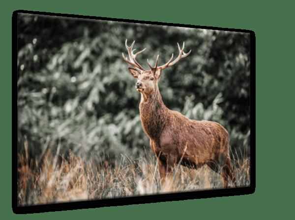 Glasbild Deer Ansicht schräg