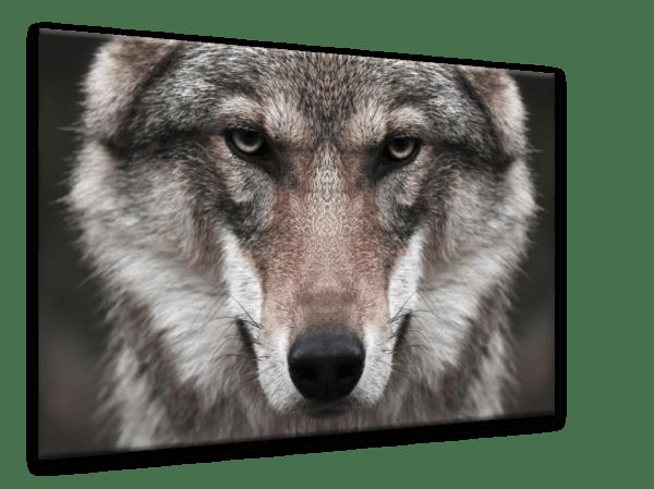 Glasbild Wolf Ansicht schräg