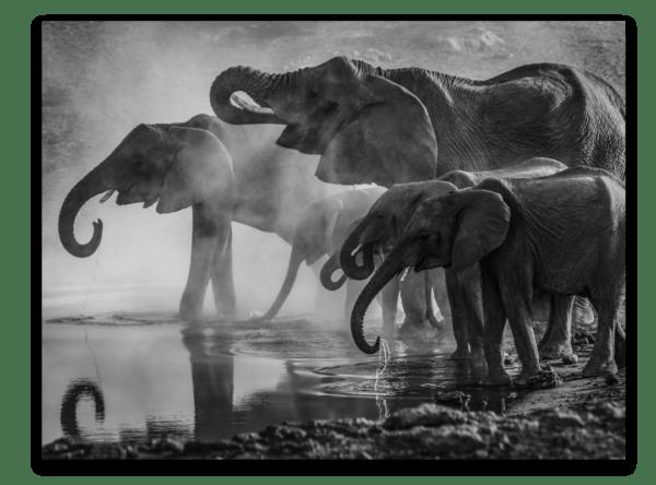 Leinwandbild Elephants