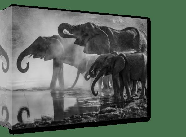 Leinwandbild Elephants Ansicht schräg