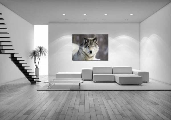 Glasbild Grauer Wolf im Wohnzimmer