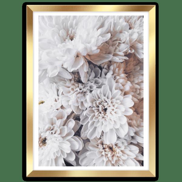 Rahmenbild Dahlias