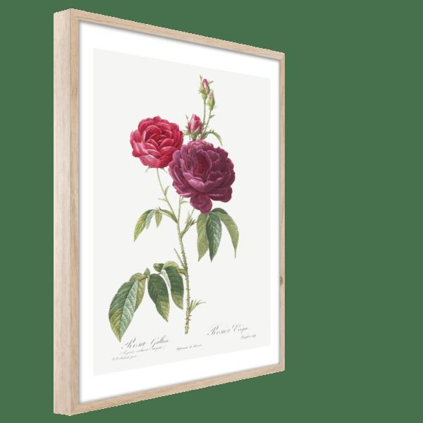 Rahmenbild Red Rose Ansicht schräg