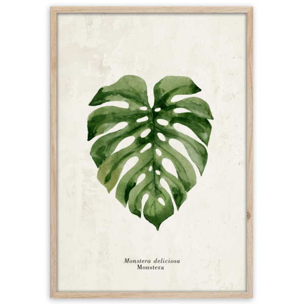 Rahmenbild Monstera