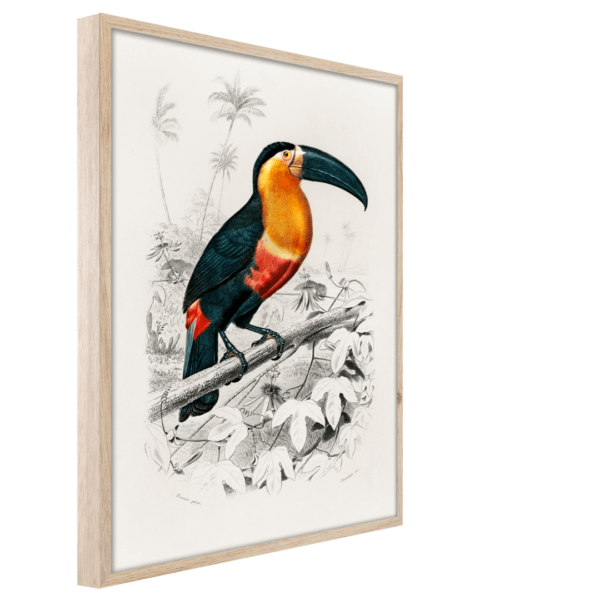 Rahmenbild Toucan Ansicht schräg
