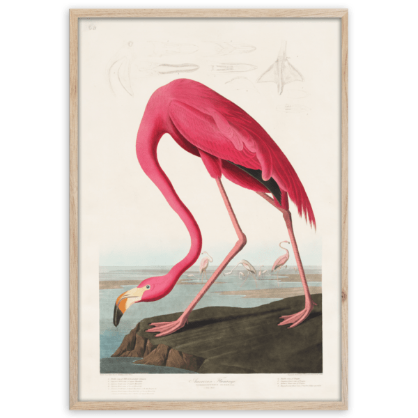 Rahmenbild Flamingo