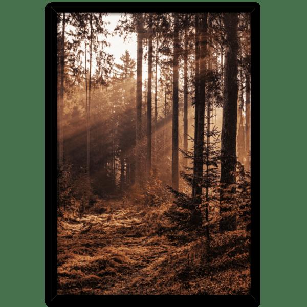 Rahmenbild Forest