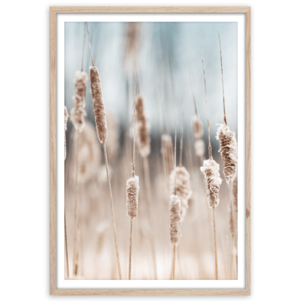 Rahmenbild Grass