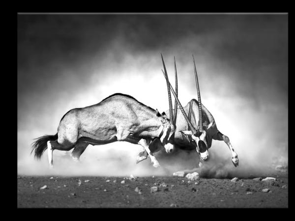 Glasbild Gazelle