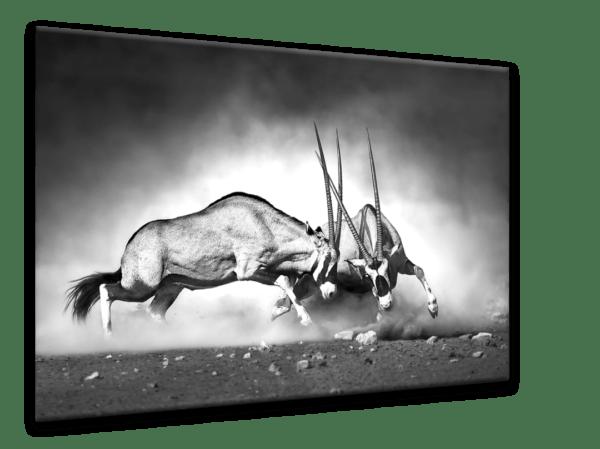Glasbild Gazelle Ansicht schräg