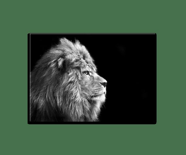 Glasbild Lion
