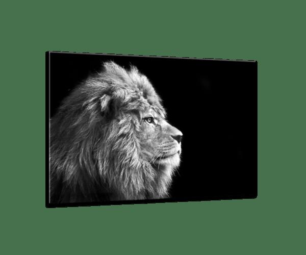 Glasbild Lion Ansicht schräg