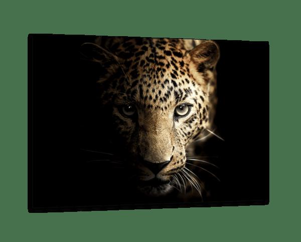 Glasbild Majestic Leopard Ansicht schräg