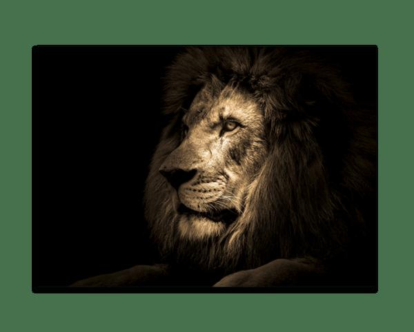 Glasbild Majestic Lion