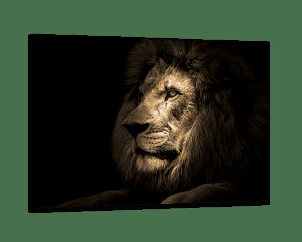 Glasbild Majestic Lion Ansicht schräg