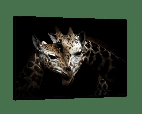 Glasbild Giraffes Love Ansicht schräg