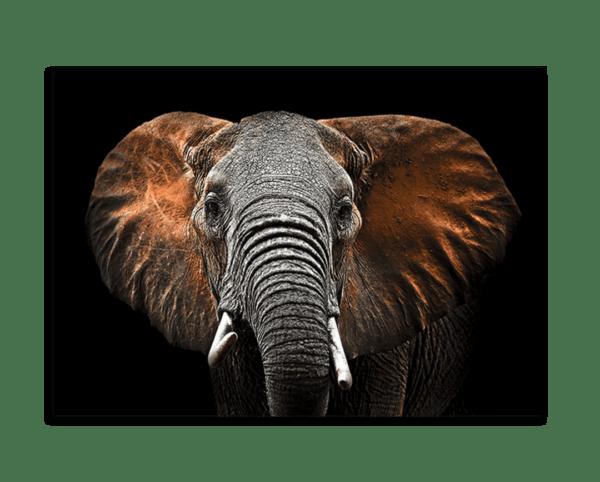 Glasbild Red Elephant