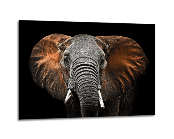 Glasbild Red Elephant Ansicht schräg