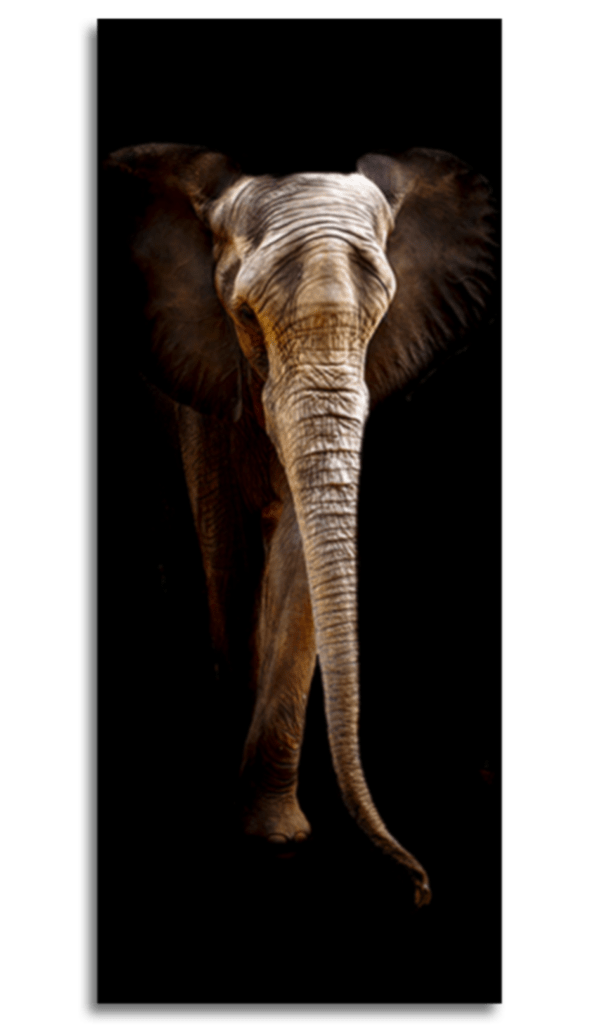 Glasbild Elefant