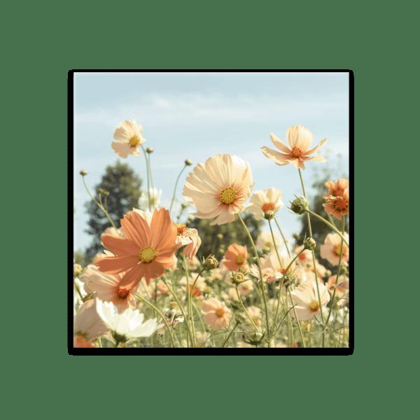 Glasbild Sommerwiese