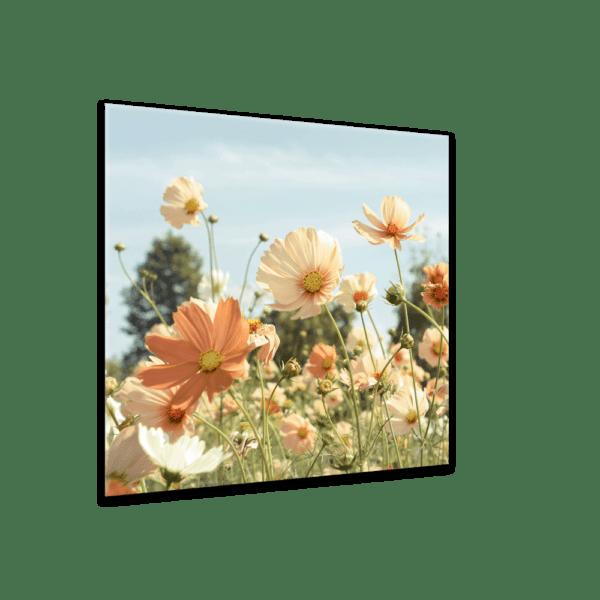Glasbild Sommerwiese Ansicht schräg