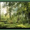 Glasbild Forest