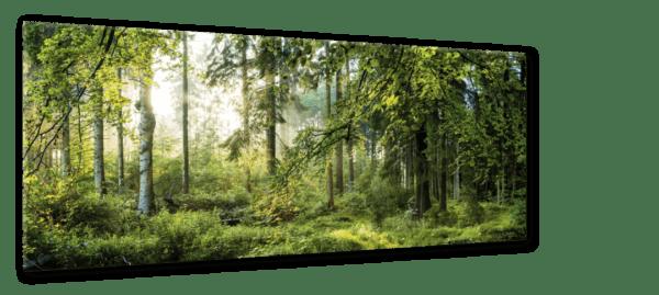 Glasbild Forest Ansicht schräg