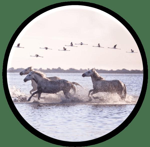 Glasbild Horses – rund