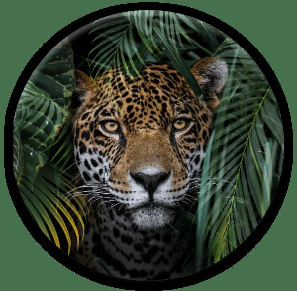 Glasbild Jungle – rund
