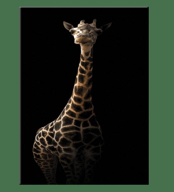 Glasbild Giraffe
