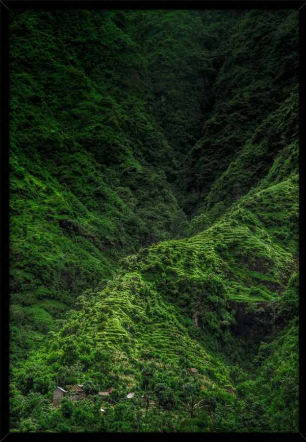 Rahmenbild Jungle