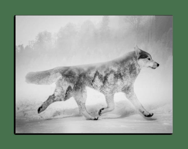 Leinwandbild Wolf