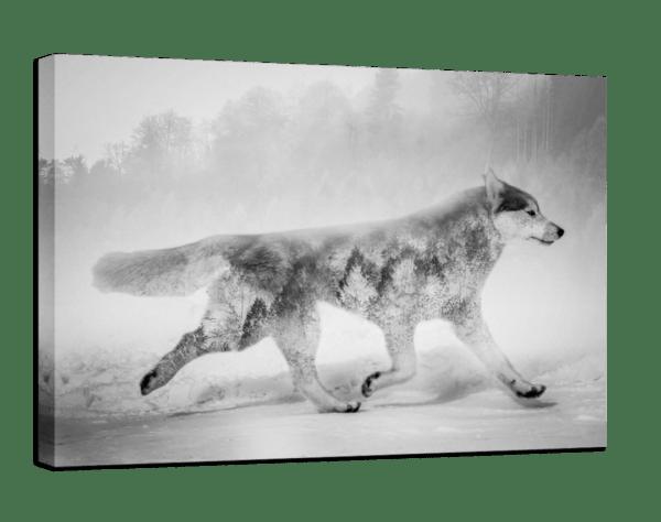 Leinwandbild Wolf Ansicht schräg