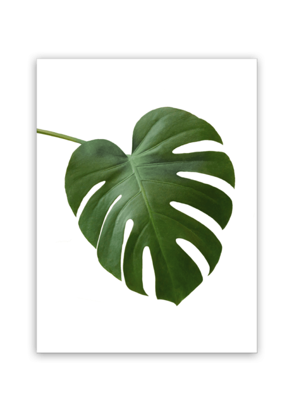 Leinwandbild Monstera