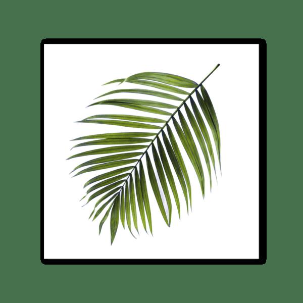 Leinwandbild Palm