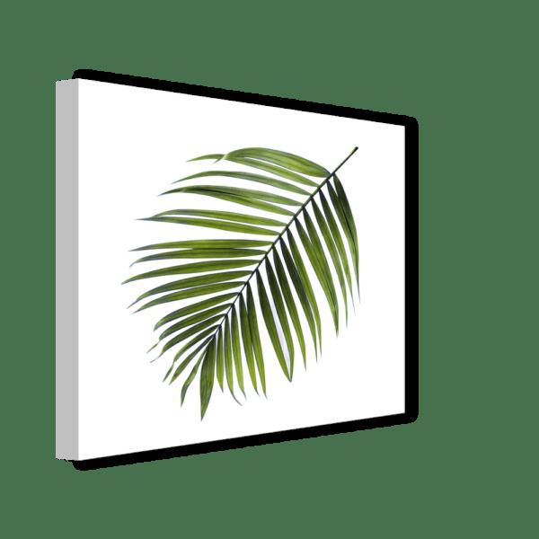 Leinwandbild Palm Ansicht schräg