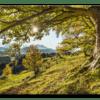 Glasbild Green Tree
