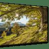 Glasbild Green Tree Ansicht schräg